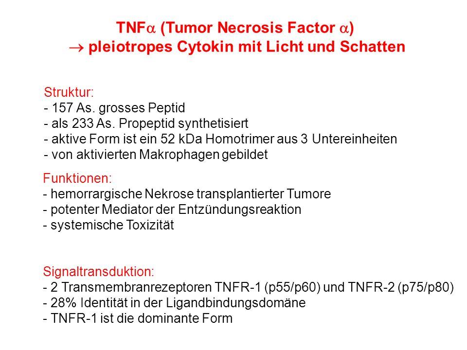 TNF (Tumor Necrosis Factor ) pleiotropes Cytokin mit Licht und Schatten Struktur: - 157 As. grosses Peptid - als 233 As. Propeptid synthetisiert - akt