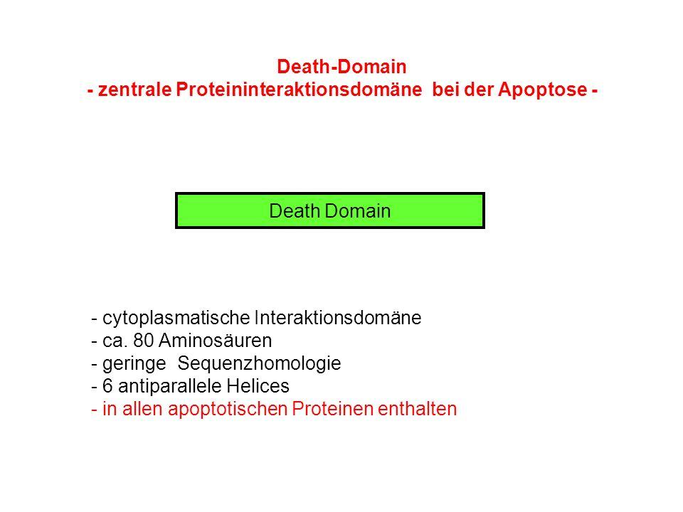 Death-Domain - zentrale Proteininteraktionsdomäne bei der Apoptose - Death Domain - cytoplasmatische Interaktionsdomäne - ca. 80 Aminosäuren - geringe