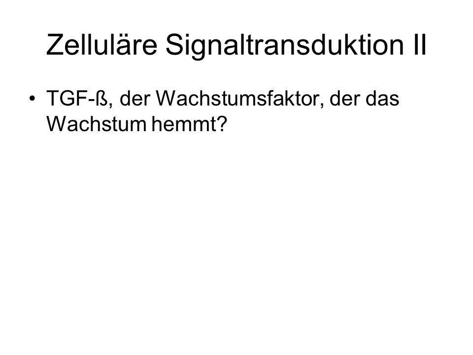 3 Typen von TGF-Rezeptoren wurden in Säugetierzellen indentifiziert: TGFß-R I: 55 kDa TGFß-R II: 75 kDa TGFß-R III: 200 – 400 kDa Proteoglycan ohne Signaltransduktionseigenschaften