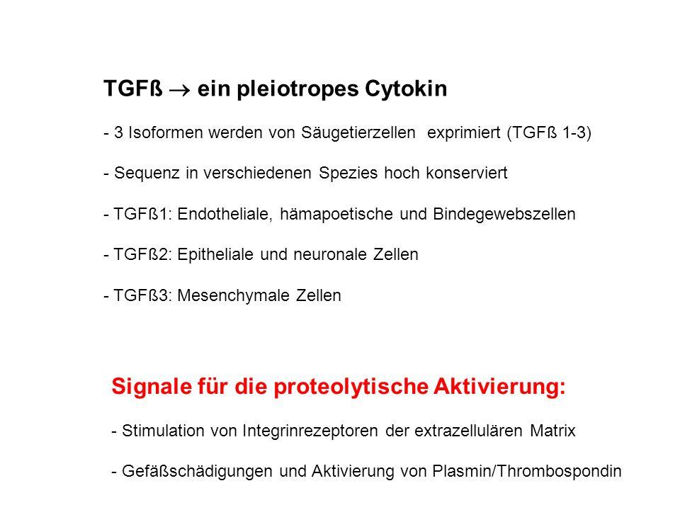 TGFß ein pleiotropes Cytokin - 3 Isoformen werden von Säugetierzellen exprimiert (TGFß 1-3) - Sequenz in verschiedenen Spezies hoch konserviert - TGFß