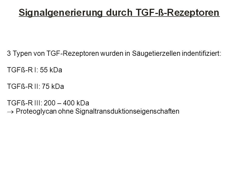 3 Typen von TGF-Rezeptoren wurden in Säugetierzellen indentifiziert: TGFß-R I: 55 kDa TGFß-R II: 75 kDa TGFß-R III: 200 – 400 kDa Proteoglycan ohne Si
