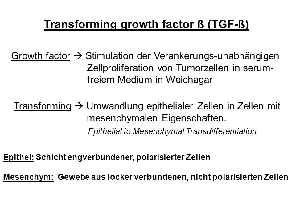 Transforming growth factor ß (TGF-ß) Growth factor Stimulation der Verankerungs-unabhängigen Zellproliferation von Tumorzellen in serum- freiem Medium