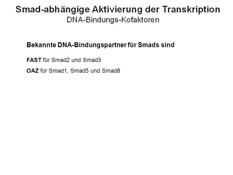 Bekannte DNA-Bindungspartner für Smads sind FAST für Smad2 und Smad3 OAZ für Smad1, Smad5 und Smad8