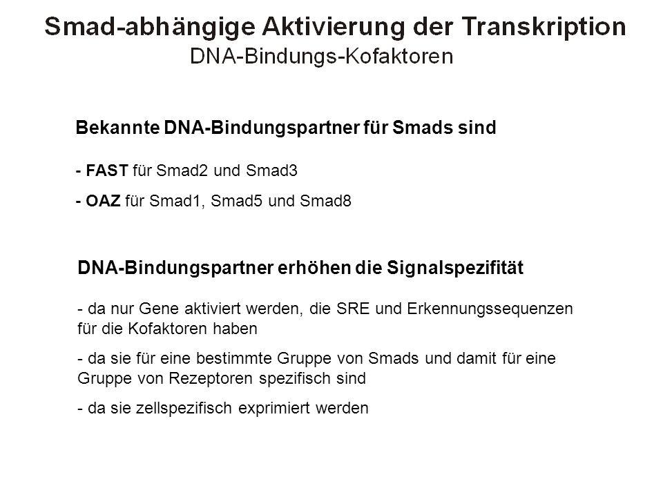 Bekannte DNA-Bindungspartner für Smads sind - FAST für Smad2 und Smad3 - OAZ für Smad1, Smad5 und Smad8 DNA-Bindungspartner erhöhen die Signalspezifit