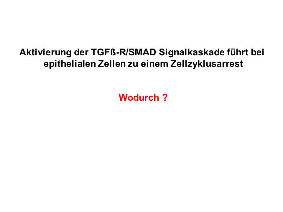 Aktivierung der TGFß-R/SMAD Signalkaskade führt bei epithelialen Zellen zu einem Zellzyklusarrest Wodurch ?
