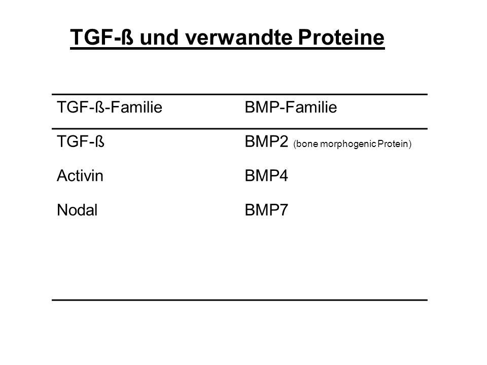 TGF-ß-FamilieBMP-Familie TGF-ßBMP2 (bone morphogenic Protein) ActivinBMP4 NodalBMP7 TGF-ß und verwandte Proteine