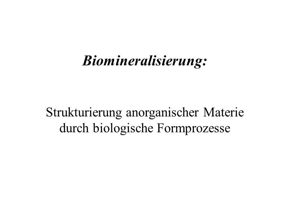 Biomineralisierung: Strukturierung anorganischer Materie durch biologische Formprozesse