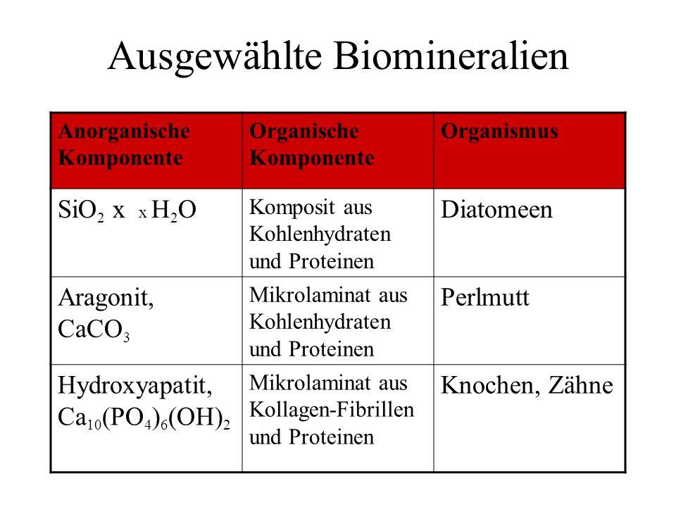 Ausgewählte Biomineralien Anorganische Komponente Organische Komponente Organismus SiO 2 x x H 2 O Komposit aus Kohlenhydraten und Proteinen Diatomeen Aragonit, CaCO 3 Mikrolaminat aus Kohlenhydraten und Proteinen Perlmutt Hydroxyapatit, Ca 10 (PO 4 ) 6 (OH) 2 Mikrolaminat aus Kollagen-Fibrillen und Proteinen Knochen, Zähne
