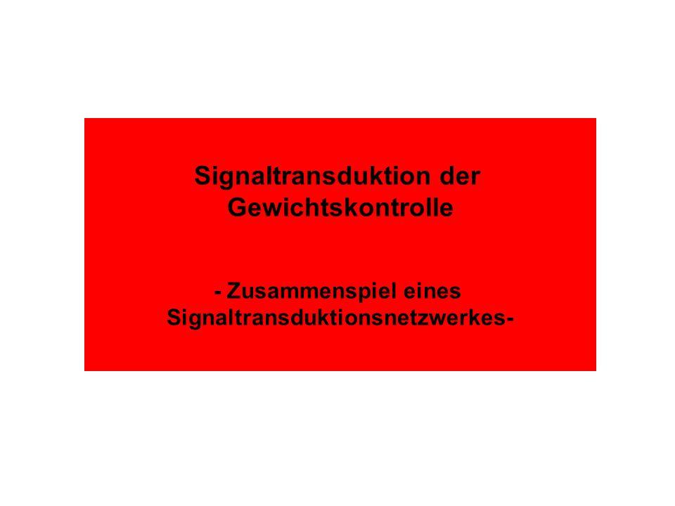 Signaltransduktion der Gewichtskontrolle - Zusammenspiel eines Signaltransduktionsnetzwerkes-
