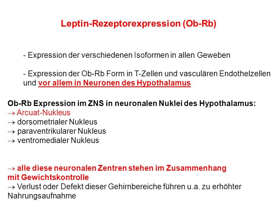 Leptin-Rezeptorexpression (Ob-Rb) - Expression der verschiedenen Isoformen in allen Geweben - Expression der Ob-Rb Form in T-Zellen und vasculären End