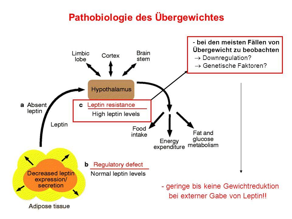 Pathobiologie des Übergewichtes - bei den meisten Fällen von Übergewicht zu beobachten Downregulation? Genetische Faktoren? - geringe bis keine Gewich