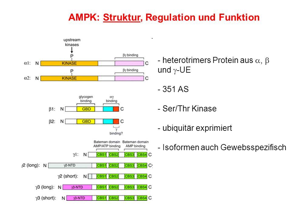 AMPK: Struktur, Regulation und Funktion - heterotrimers Protein aus, und -UE - 351 AS - Ser/Thr Kinase - ubiquitär exprimiert - Isoformen auch Gewebss
