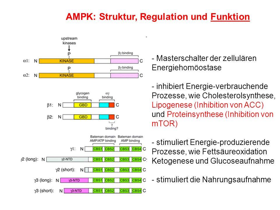 - Masterschalter der zellulären Energiehomöostase - inhibiert Energie-verbrauchende Prozesse, wie Cholesterolsynthese, Lipogenese (Inhibition von ACC)