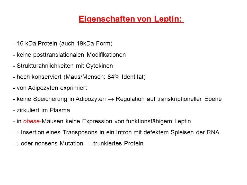 - 16 kDa Protein (auch 19kDa Form) - keine posttranslationalen Modifikationen - Strukturähnlichkeiten mit Cytokinen - hoch konserviert (Maus/Mensch: 8