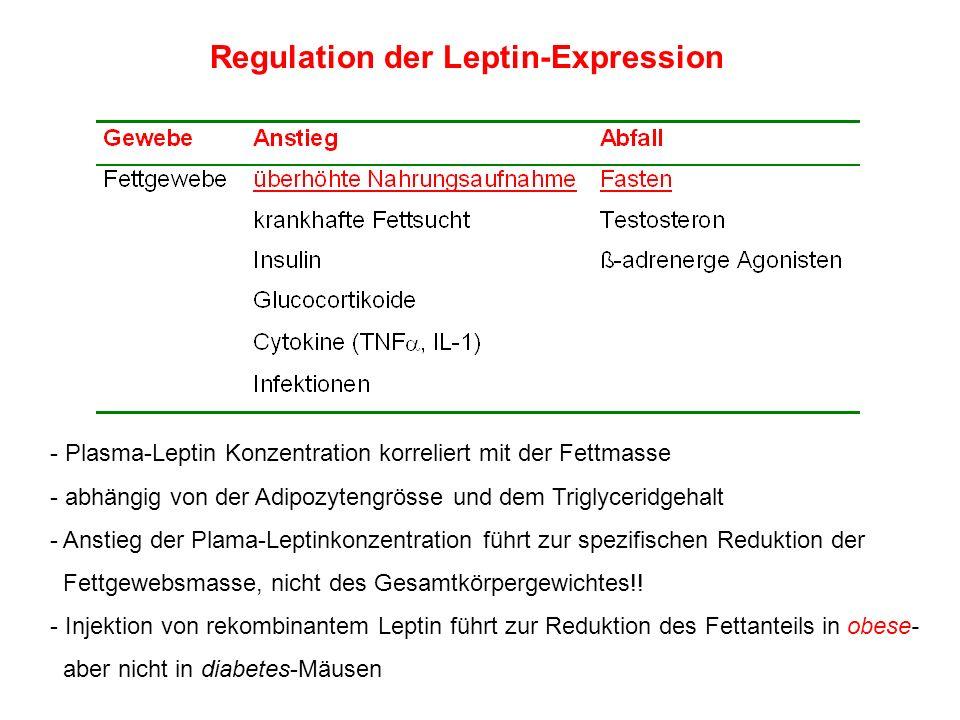 Regulation der Leptin-Expression - Plasma-Leptin Konzentration korreliert mit der Fettmasse - abhängig von der Adipozytengrösse und dem Triglyceridgeh