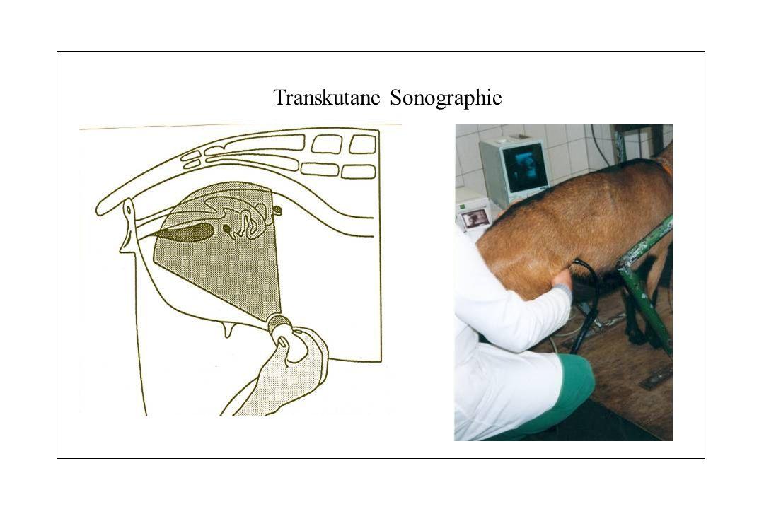 Transkutane Sonographie