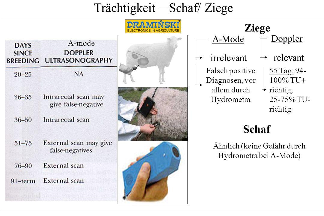Trächtigkeit – Schaf/ Ziege Doppler A-mode A-Mode irrelevant Falsch positive Diagnosen, vor allem durch Hydrometra relevant 55 Tag: 94- 100% TU+ richt