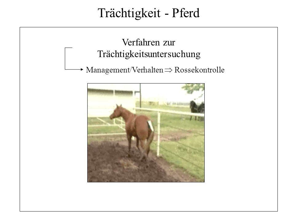 15 Trächtigkeit - Pferd Verfahren zur Trächtigkeitsuntersuchung Management/Verhalten Rossekontrolle