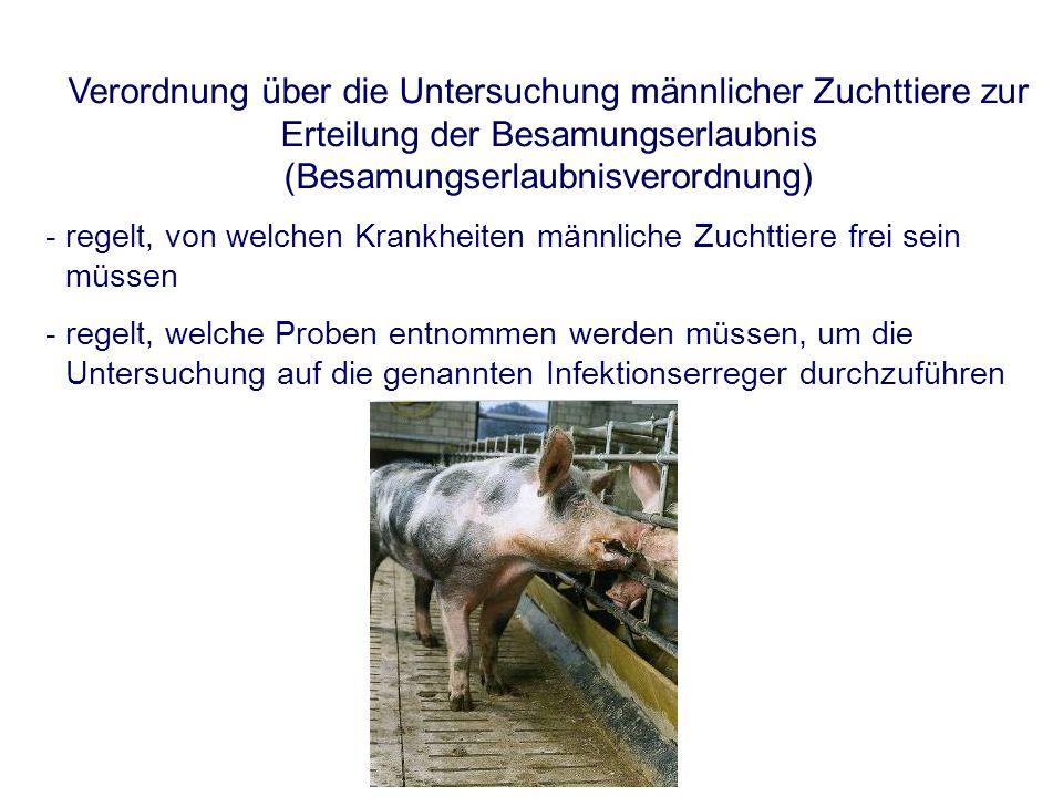 Verordnung über die Untersuchung männlicher Zuchttiere zur Erteilung der Besamungserlaubnis (Besamungserlaubnisverordnung) - regelt, von welchen Krankheiten männliche Zuchttiere frei sein müssen - regelt, welche Proben entnommen werden müssen, um die Untersuchung auf die genannten Infektionserreger durchzuführen