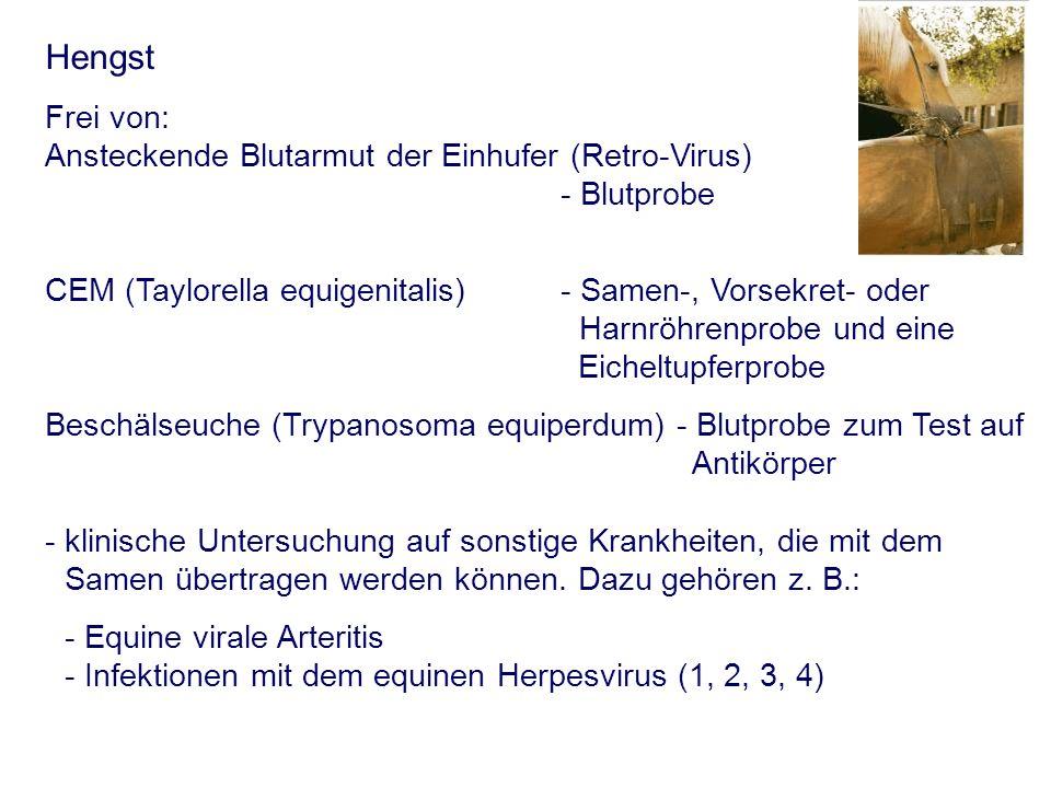 Hengst Frei von: Ansteckende Blutarmut der Einhufer (Retro-Virus) - Blutprobe CEM (Taylorella equigenitalis) - Samen-, Vorsekret- oder Harnröhrenprobe