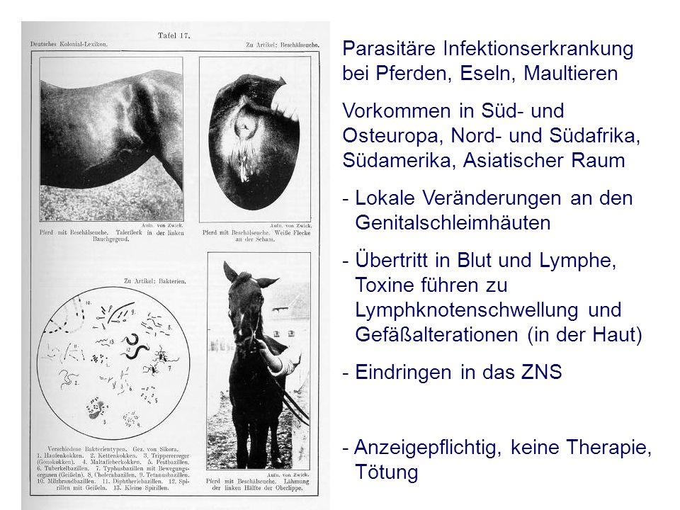 Parasitäre Infektionserkrankung bei Pferden, Eseln, Maultieren Vorkommen in Süd- und Osteuropa, Nord- und Südafrika, Südamerika, Asiatischer Raum - Lokale Veränderungen an den Genitalschleimhäuten - Übertritt in Blut und Lymphe, Toxine führen zu Lymphknotenschwellung und Gefäßalterationen (in der Haut) - Eindringen in das ZNS - Anzeigepflichtig, keine Therapie, Tötung
