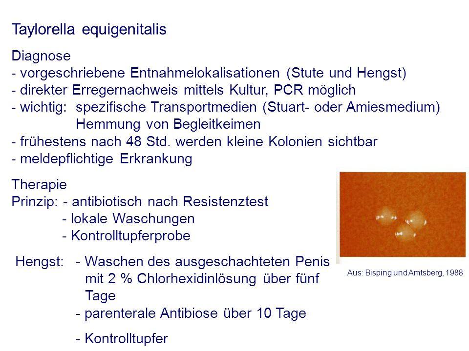 Taylorella equigenitalis Diagnose - vorgeschriebene Entnahmelokalisationen (Stute und Hengst) - direkter Erregernachweis mittels Kultur, PCR möglich - wichtig: spezifische Transportmedien (Stuart- oder Amiesmedium) Hemmung von Begleitkeimen - frühestens nach 48 Std.