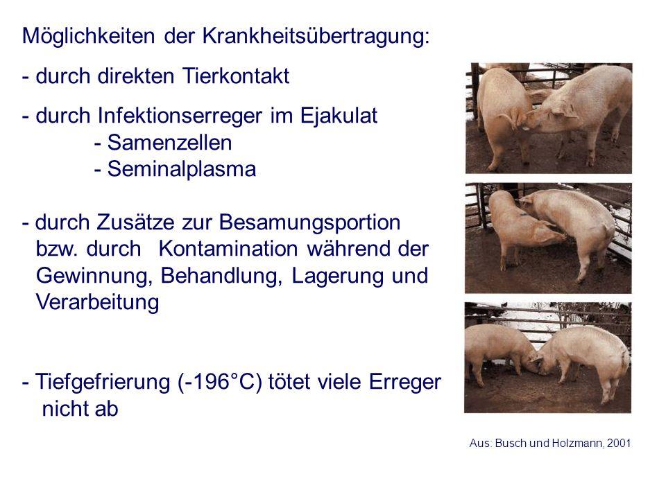 Anforderungen an einen Hengst, bei dem Sperma gewonnen werden soll (EU weit) - Tierärztliche vorsaisonale Untersuchung ist Grundlage der Zuteilung der Besamungserlaubnis (jährlich, frühestens 14 Tage nach Aufstallung) - IAE negativ - Trypanosoma equiperdum negativ - Taylorella equigenitalis negativ (2 mal im Abstand von 7 Tagen) - Equine Arteritis (Serum Neutralisation < 1:4 oder negative Virusisolation) - seit 30 Tagen vor erster Spermagewinnung in Beständen, in denen keine klinischen Anzeichen einer IAE vorlagen - seit 60 Tagen vor erster Spermagewinnung in Beständen, in denen keine klinischen Anzeichen einer CEM vorlagen - seit 30 Tagen vor der ersten Spermagewinnung nicht im Natursprung - während der Phase der Spermagewinnung kein Einsatz im Natursprung
