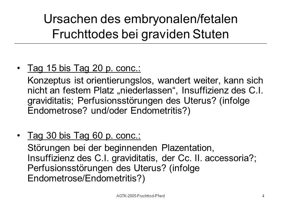 AGTK-2005-Fruchttod-Pferd4 Ursachen des embryonalen/fetalen Fruchttodes bei graviden Stuten Tag 15 bis Tag 20 p. conc.: Konzeptus ist orientierungslos