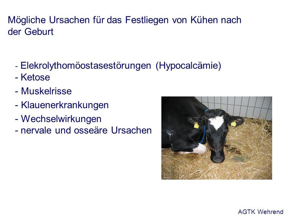 Mögliche Ursachen für das Festliegen von Kühen nach der Geburt - Elekrolythomöostasestörungen (Hypocalcämie) - Ketose - Muskelrisse - Klauenerkrankung