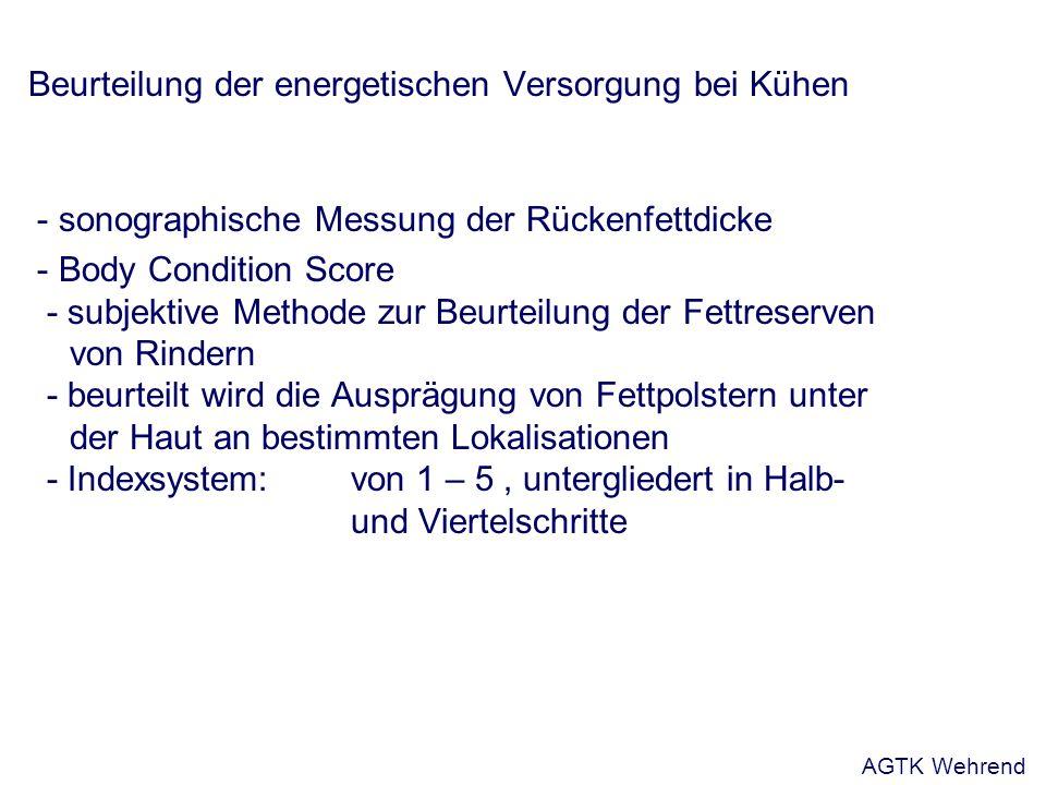 Beurteilung der energetischen Versorgung bei Kühen - sonographische Messung der Rückenfettdicke - Body Condition Score - subjektive Methode zur Beurte
