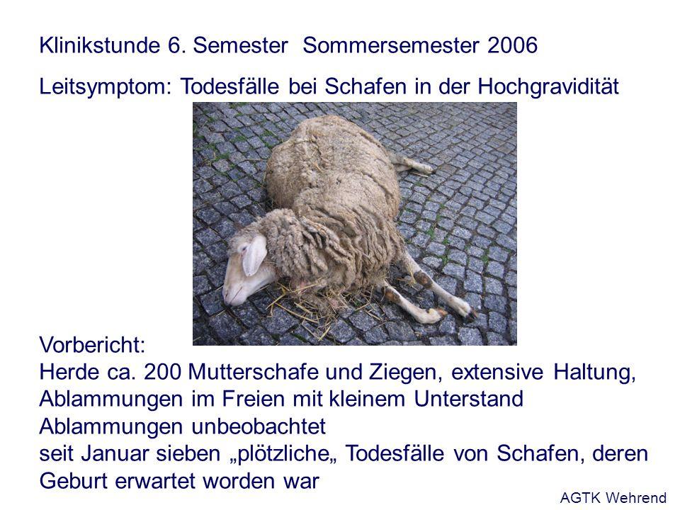 Klinikstunde 6. Semester Sommersemester 2006 Leitsymptom: Todesfälle bei Schafen in der Hochgravidität Vorbericht: Herde ca. 200 Mutterschafe und Zieg