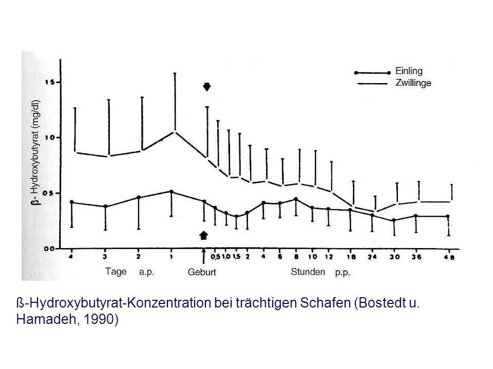 ß-Hydroxybutyrat-Konzentration bei trächtigen Schafen (Bostedt u. Hamadeh, 1990)