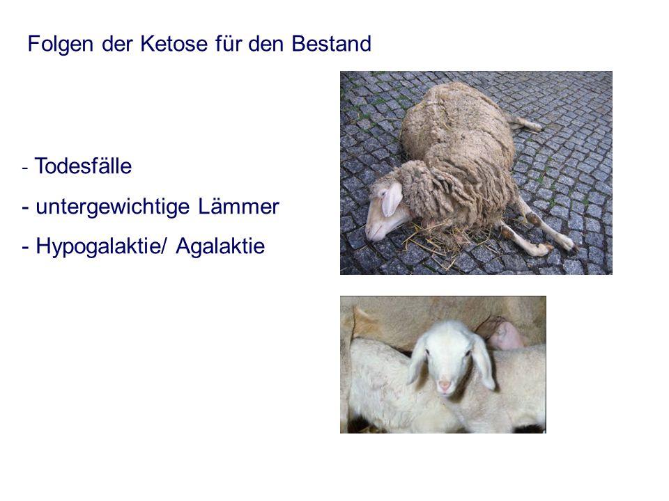 - Todesfälle - untergewichtige Lämmer - Hypogalaktie/ Agalaktie Folgen der Ketose für den Bestand