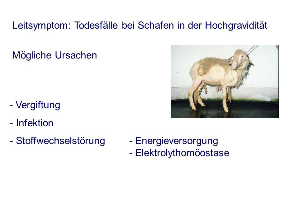 - Vergiftung - Infektion - Stoffwechselstörung- Energieversorgung - Elektrolythomöostase Leitsymptom: Todesfälle bei Schafen in der Hochgravidität Mög