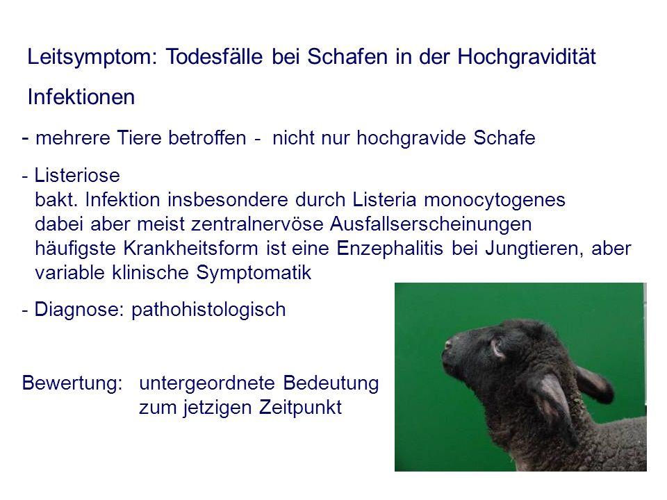 - mehrere Tiere betroffen - nicht nur hochgravide Schafe - Listeriose bakt. Infektion insbesondere durch Listeria monocytogenes dabei aber meist zentr
