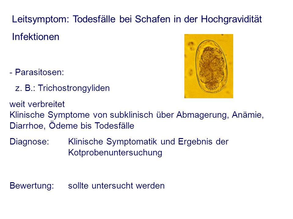 Leitsymptom: Todesfälle bei Schafen in der Hochgravidität Infektionen - Parasitosen: z. B.: Trichostrongyliden weit verbreitet Klinische Symptome von