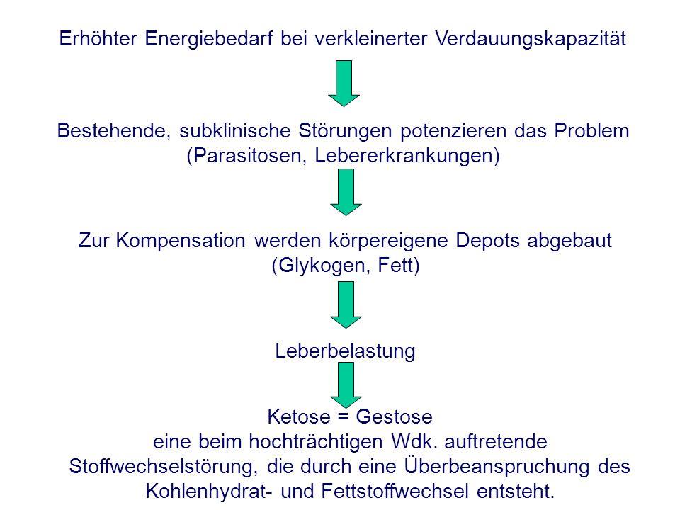 Erhöhter Energiebedarf bei verkleinerter Verdauungskapazität Bestehende, subklinische Störungen potenzieren das Problem (Parasitosen, Lebererkrankunge