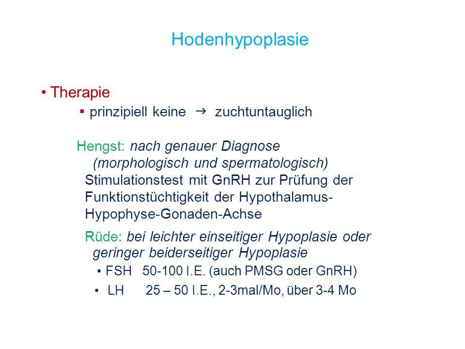 Hodenhypoplasie Therapie prinzipiell keine zuchtuntauglich Hengst: nach genauer Diagnose (morphologisch und spermatologisch) Stimulationstest mit GnRH