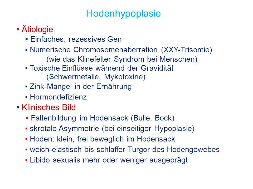 Ätiologie Einfaches, rezessives Gen Numerische Chromosomenaberration (XXY-Trisomie) (wie das Klinefelter Syndrom bei Menschen) Toxische Einflüsse währ