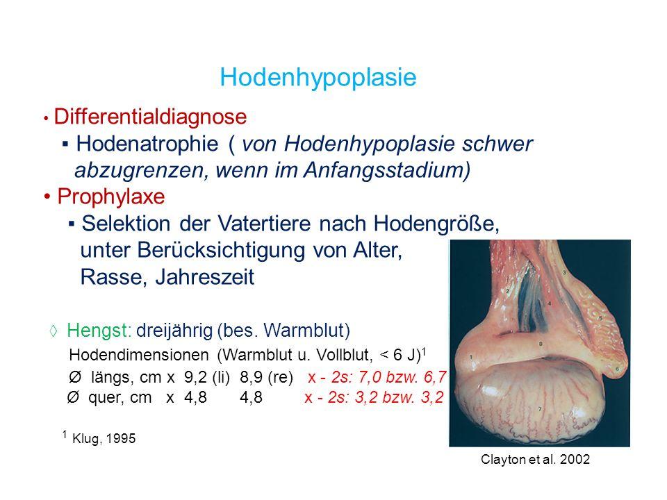 Hodenhypoplasie Differentialdiagnose Hodenatrophie ( von Hodenhypoplasie schwer abzugrenzen, wenn im Anfangsstadium) Prophylaxe Selektion der Vatertie