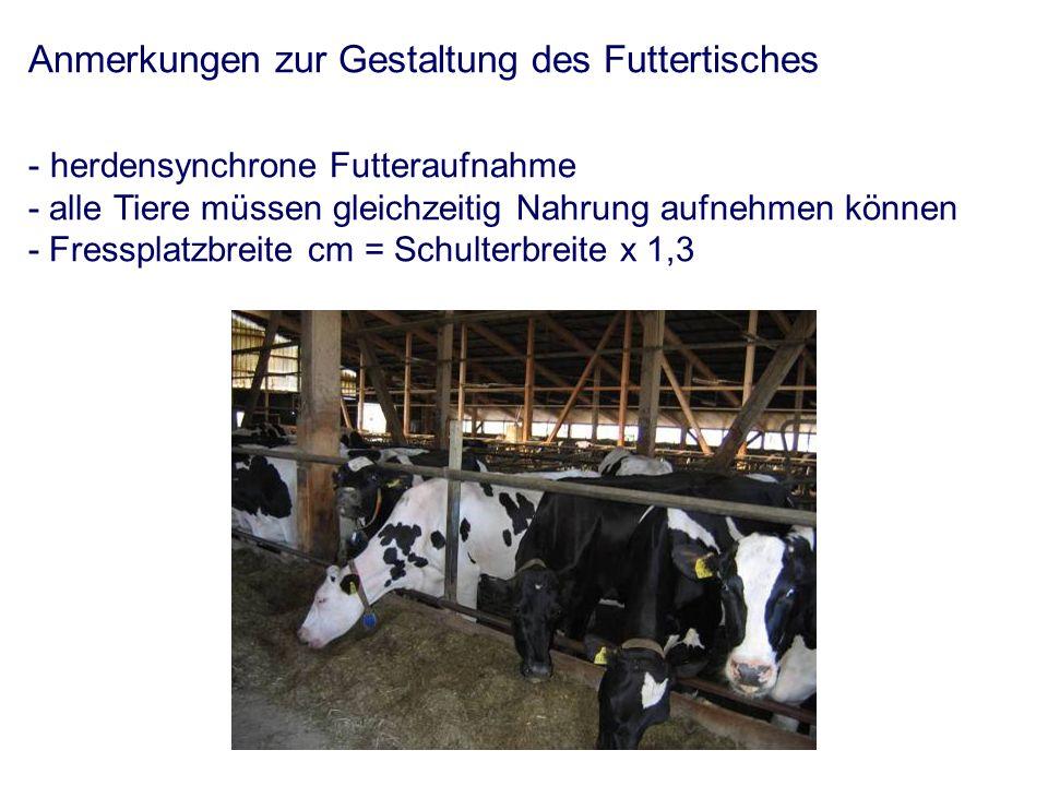 Anmerkungen zur Gestaltung des Futtertisches - herdensynchrone Futteraufnahme - alle Tiere müssen gleichzeitig Nahrung aufnehmen können - Fressplatzbreite cm = Schulterbreite x 1,3