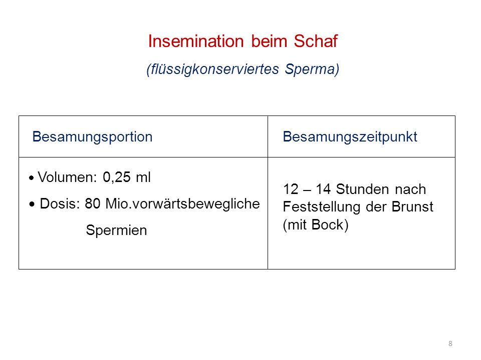 Insemination beim Schaf (flüssigkonserviertes Sperma) Besamungsportion Volumen: 0,25 ml Dosis: 80 Mio.vorwärtsbewegliche Spermien Besamungszeitpunkt 1