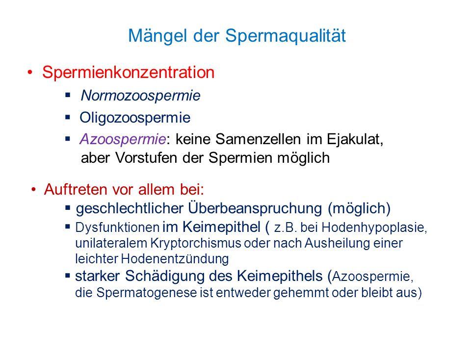 Mängel der Spermaqualität Spermienkonzentration Normozoospermie Oligozoospermie Azoospermie: keine Samenzellen im Ejakulat, aber Vorstufen der Spermie