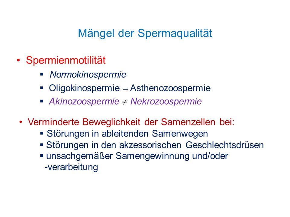 Mängel der Spermaqualität Spermienmotilität Normokinospermie Oligokinospermie Asthenozoospermie Akinozoospermie Nekrozoospermie Verminderte Beweglichk