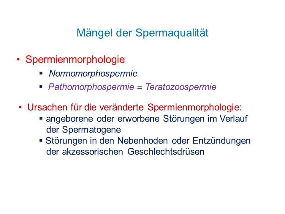 Mängel der Spermaqualität Spermienmorphologie Normomorphospermie Pathomorphospermie Teratozoospermie Ursachen für die veränderte Spermienmorphologie: