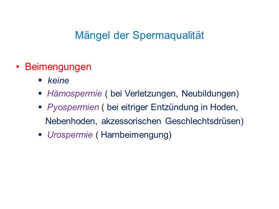Mängel der Spermaqualität Beimengungen keine Hämospermie ( bei Verletzungen, Neubildungen) Pyospermien ( bei eitriger Entzündung in Hoden, Nebenhoden,