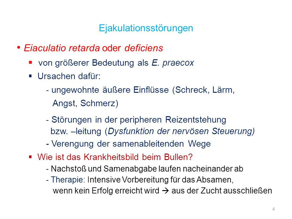 Eiaculatio retarda oder deficiens von größerer Bedeutung als E. praecox Ursachen dafür: - ungewohnte äußere Einflüsse (Schreck, Lärm, Angst, Schmerz)