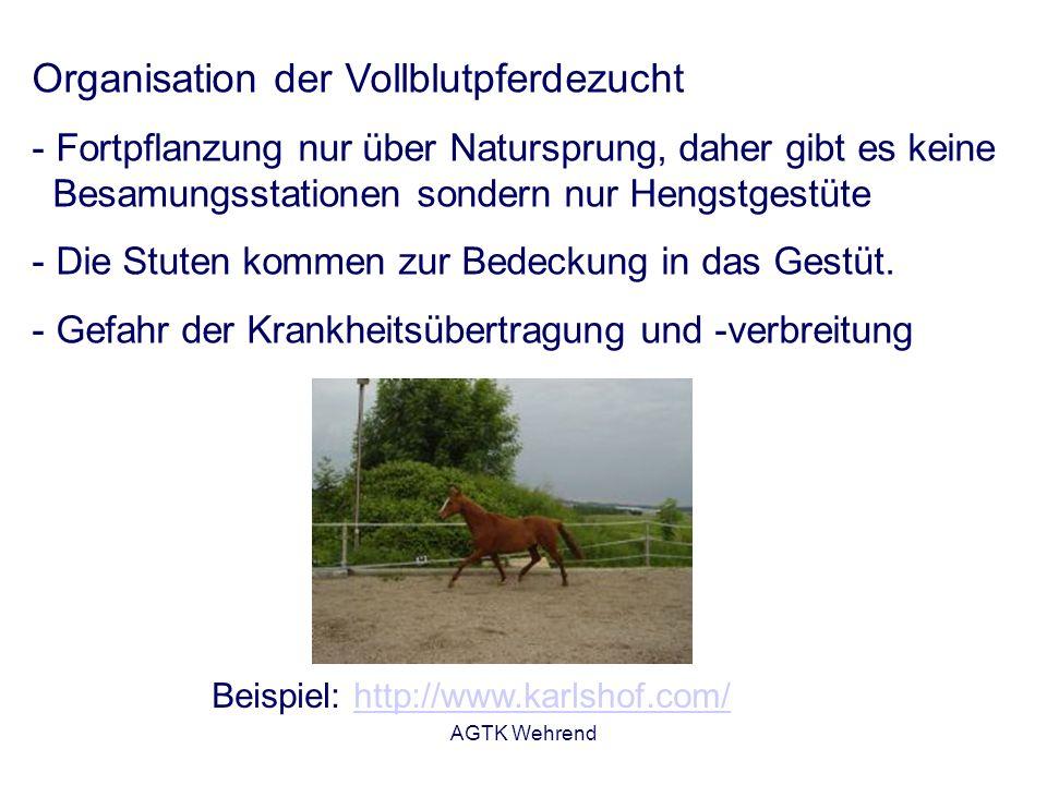 AGTK Wehrend Organisation der Vollblutpferdezucht - Fortpflanzung nur über Natursprung, daher gibt es keine Besamungsstationen sondern nur Hengstgestüte - Die Stuten kommen zur Bedeckung in das Gestüt.