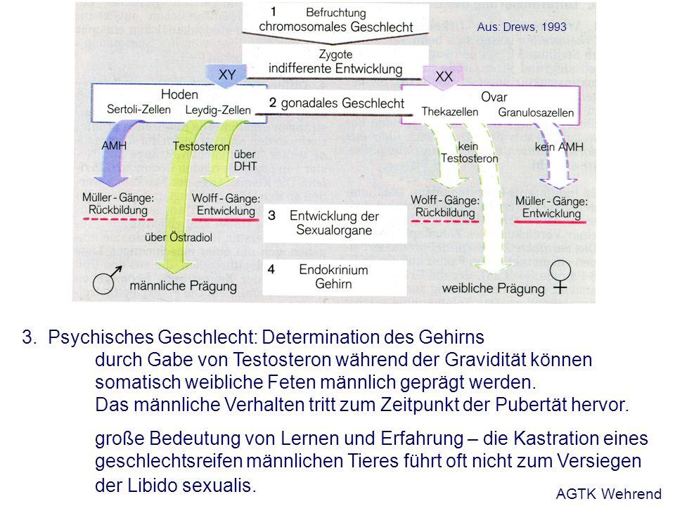 3.Psychisches Geschlecht: Determination des Gehirns durch Gabe von Testosteron während der Gravidität können somatisch weibliche Feten männlich geprägt werden.