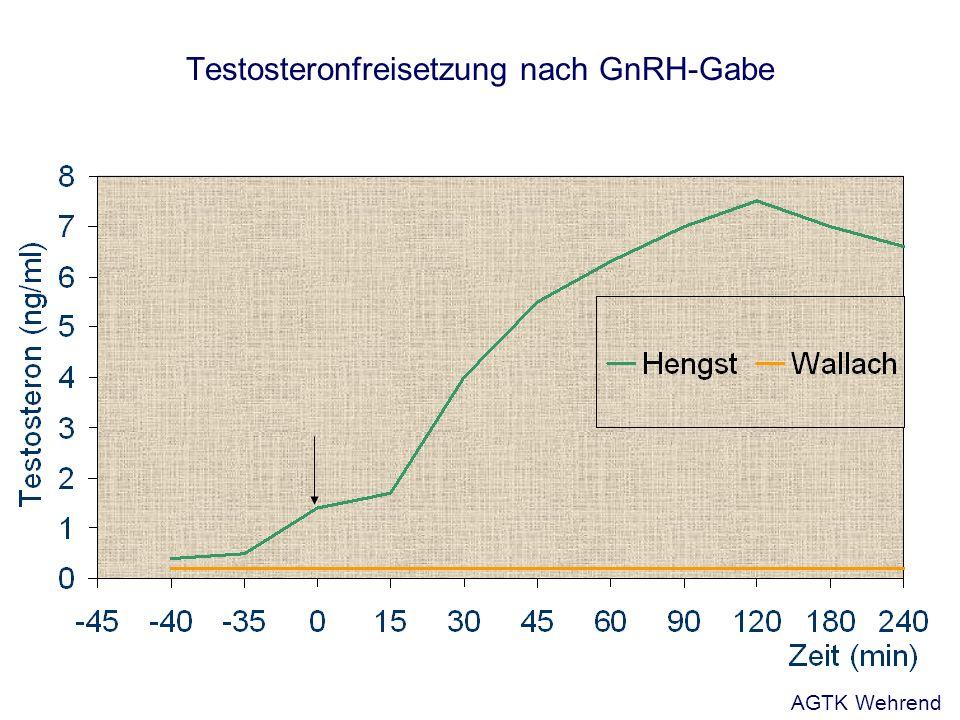 Testosteronfreisetzung nach GnRH-Gabe AGTK Wehrend